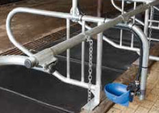 Cattle Replacement Stalls